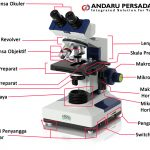 Bagian Bagian Mikroskop Yang Penting Dan Perlu Anda Ketahui
