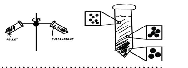 cara-kerja-rotor-centrifuge