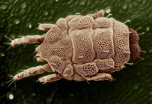 mikroskop-mengamati-objek7