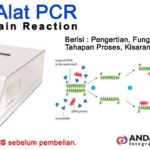 PCR – Polymerase Chain Reaction : Pengertian, Fungsi, Tahapan