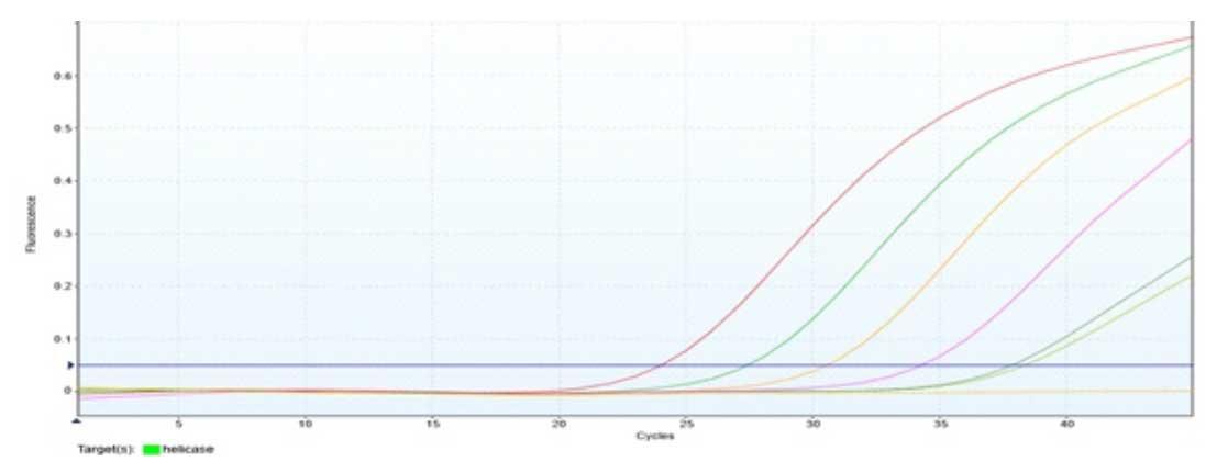 contoh-hasil-pengamatan-dengan-alat-pcr-dan-reagen-pcr-mbiocov-19-rt-pcr-kit