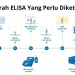 Peter Perlmann dan Sejarah ELISA